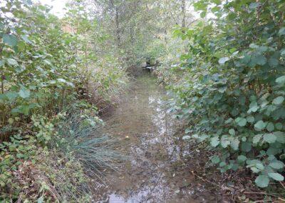 Vegetation-Ruisseau