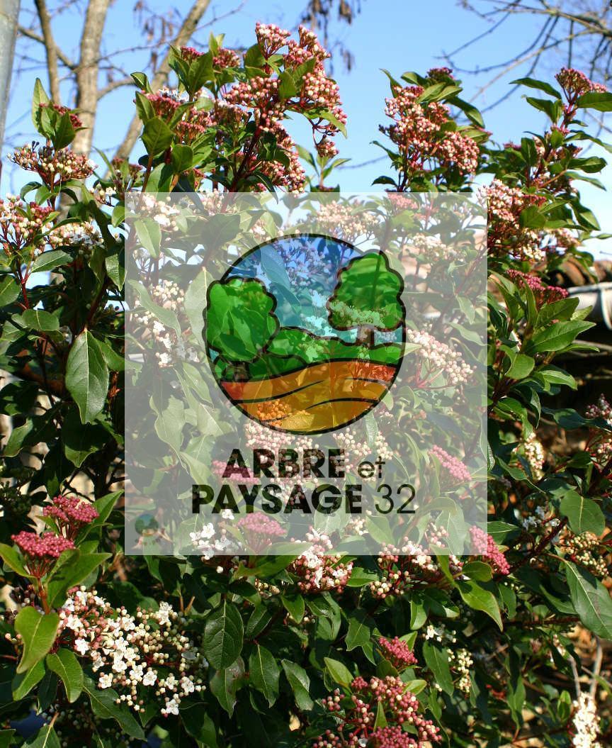 Arbuste Fleuri Feuillage Persistant essences locales | arbre et paysage 32