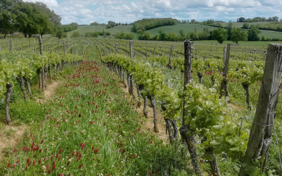 Vigne et agroécologie