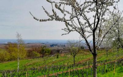 Agronomie des sols vivants et agroforesterie en viticulture